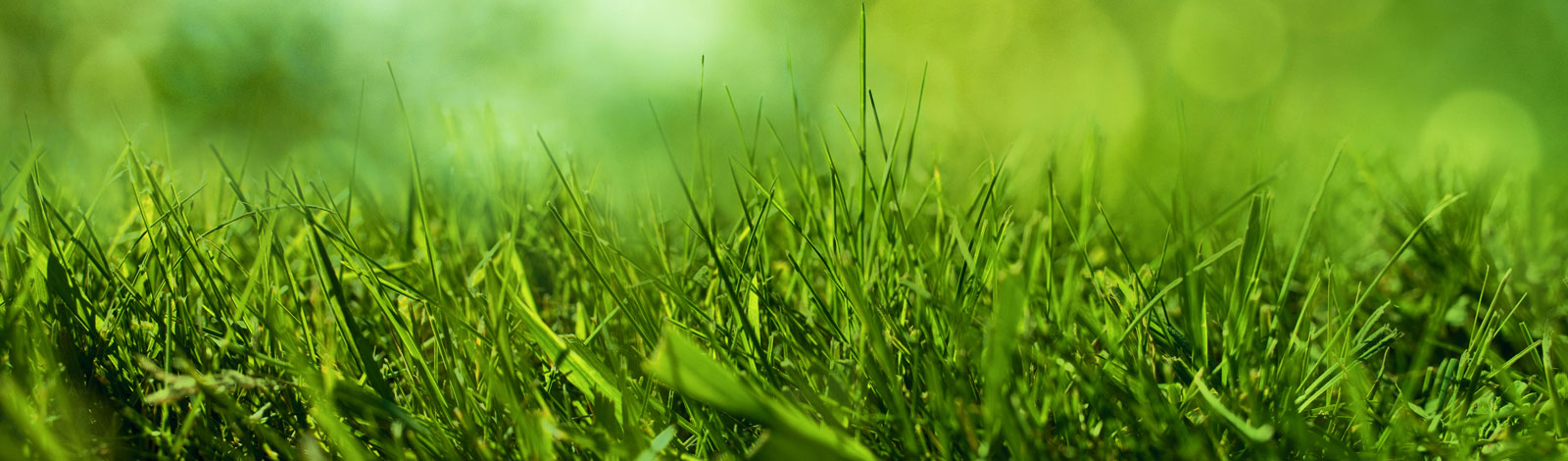 RESIDENTIAL LAWN & YARD CARE